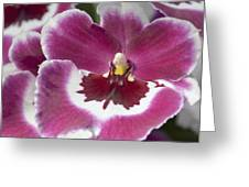Pink Pansy Orchid Greeting Card