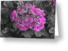 Pink Paridise Greeting Card