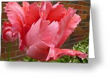 Pink Parrot Tulip Greeting Card