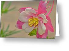 Pink Passion Greeting Card by Old Pueblo Photography