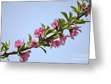 Pink Peach Blossoms Greeting Card