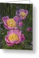 Pink Peonies In My Garden Greeting Card