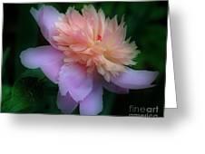 Pink Peony Flower Greeting Card