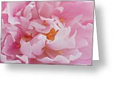 Pink Peony Flower Waving Petals  Greeting Card