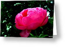 Pink Peony On The Side Greeting Card