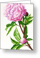 Pink Peony With Leaves Greeting Card by Sharon Freeman