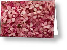 Pink Petal Greeting Card