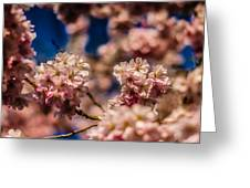 Pink Petal Profusion Greeting Card