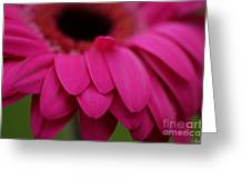 Pink Petals Greeting Card