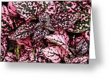 Pink - Plant - Petals Greeting Card