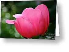 Pink Petals Green Diamonds Greeting Card