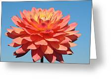 Pink Petals In The Sky Greeting Card