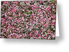 Pink Petals On Stones  Greeting Card