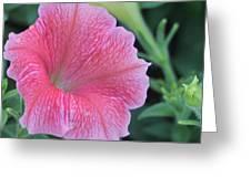 Pink Petunia Greeting Card by Victoria Sheldon
