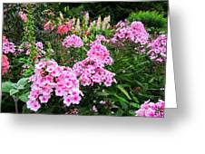 Pink Phlox Greeting Card