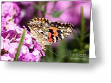 Pink Phlox With Butterfly Greeting Card