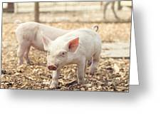 Pink Piglet Greeting Card