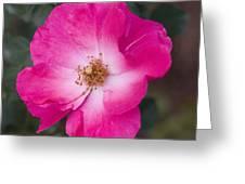 Pink Pink Greeting Card