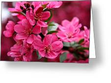 Pink Plum Blossoms Greeting Card
