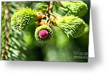 Pink Point Greeting Card