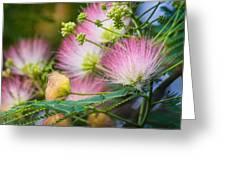 Pink Pom Poms Greeting Card