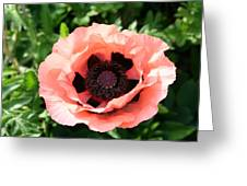 Pink Poppy Bloom Greeting Card