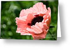 Pink Poppy Today Greeting Card
