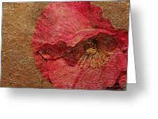 Pink Poppy Gold Leaf Greeting Card