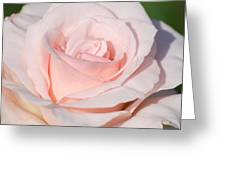 Pink Promise Greeting Card by Nancy Edwards
