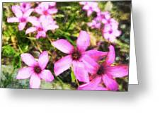 Pink Propellers  Greeting Card