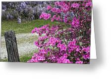 Pink Purple Mississippi Blooms Greeting Card