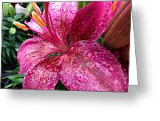 Pink Rain Speckled Lily Greeting Card