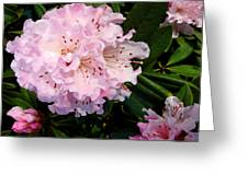 Pink Rhodies Greeting Card