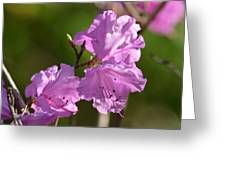 Pink Rhododendrons Greeting Card