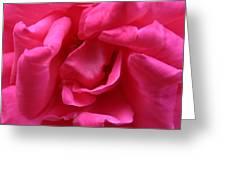 Pink Rose 01 Greeting Card