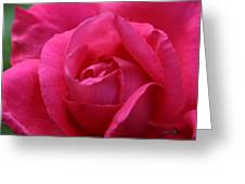 Pink Rose 02 Greeting Card