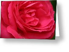 Pink Rose 03 Greeting Card