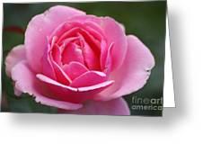 Pink Rose 08 Greeting Card