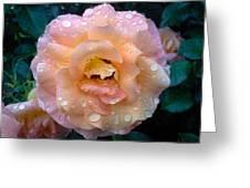 Pink Rose Bathed In Rain Greeting Card