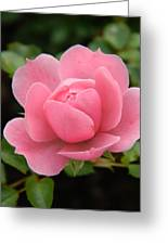 Pink Rose Bloom Greeting Card