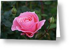 Pink Rose Bud I Greeting Card