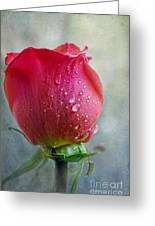 Pink Rose Bud With Drops Greeting Card