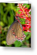 Pink Rose Butterfly Greeting Card