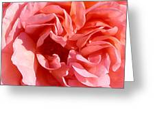 Pink Rose Closeup Greeting Card