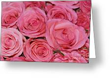 Pink Rose Closeup Greeting Card