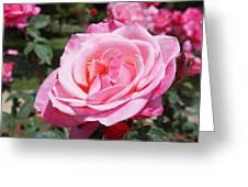 Pink Rose Flower Floral Art Prints Roses Greeting Card