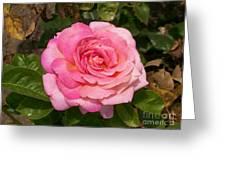 Pink Rose Full Bloom Greeting Card