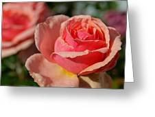 Pink Rose Greeting Card