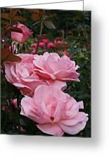 Pink Rose Group I Greeting Card