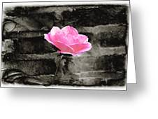 Pink Rose In Black And White Greeting Card